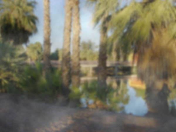 Landscape where trees and lake appear blurry